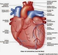 Échocardiographie de l'infarctus aigu du myocarde avec sus-décalage du segment ST